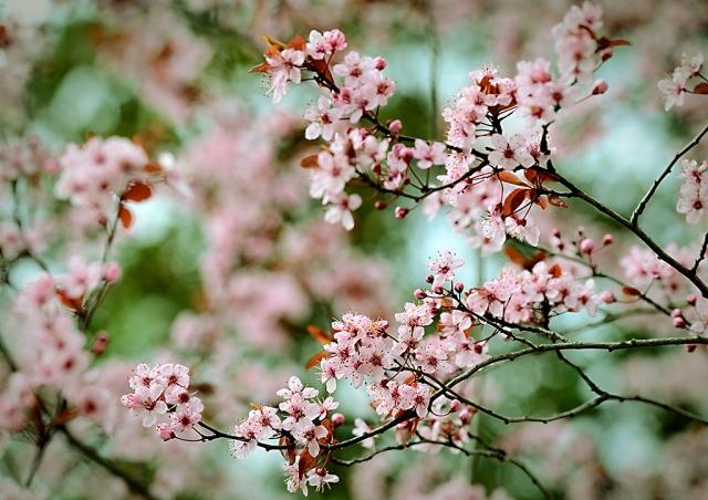 pomlad6