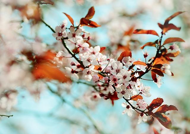 pomlad9